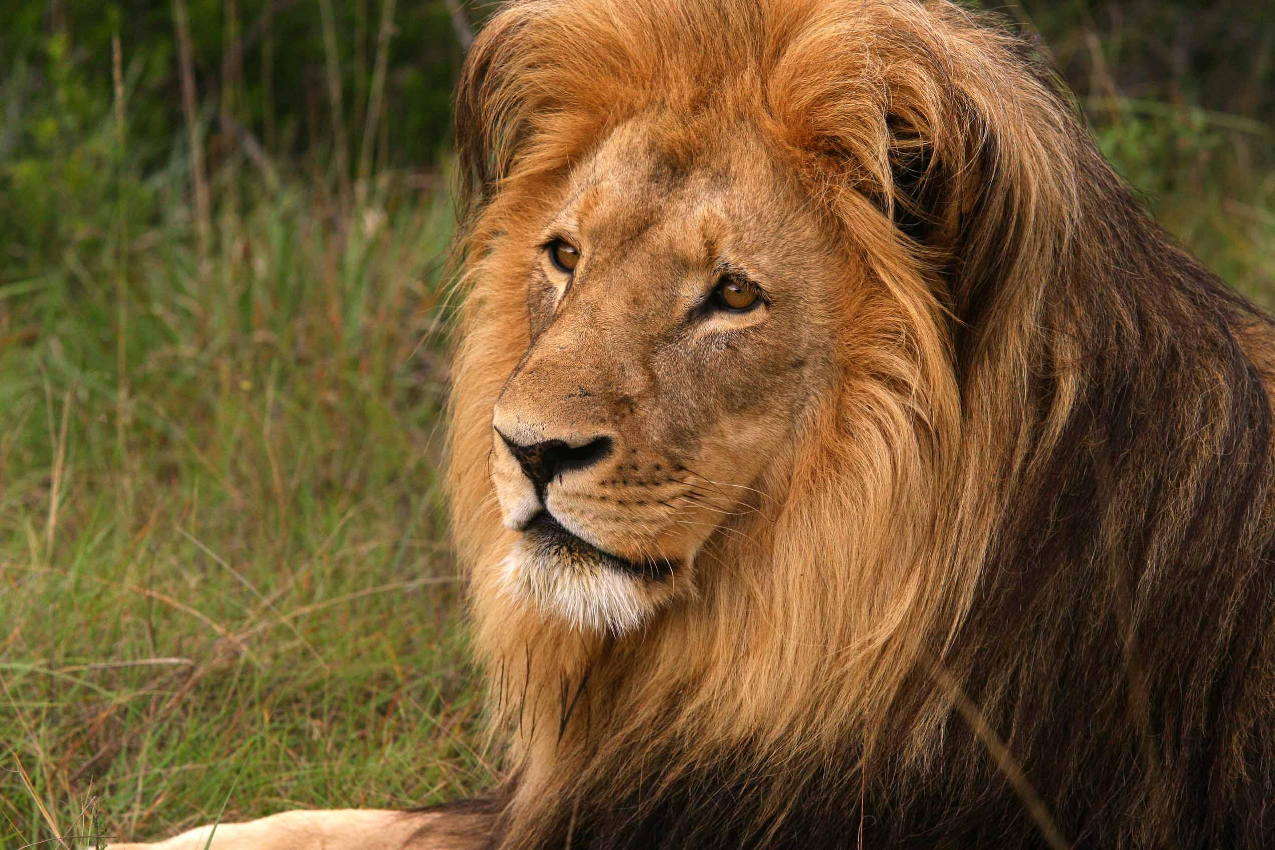 проектировании живая картинка лев келуш великолепный памятник